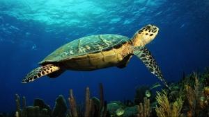 Marine Life NIEUW