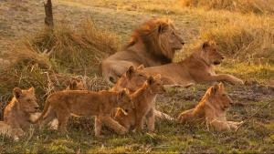 Gli angoli più selvaggi del pianeta Destination Wild