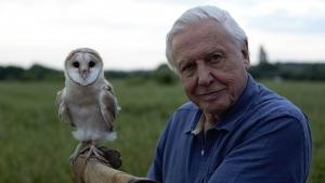 Con David Attenborough Alla conquista dei cieli