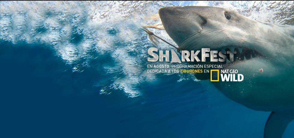 Concurso SharkFest 2016