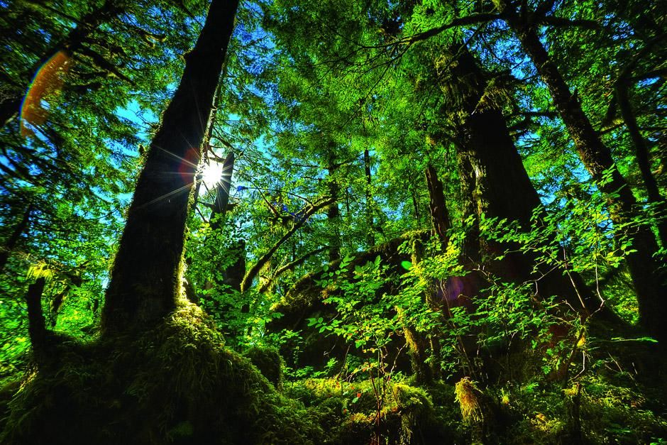 Temperate Rain Forest British Columbia, Canada. This image is from Untamed Americas. [Dagens billede - juni 2012]