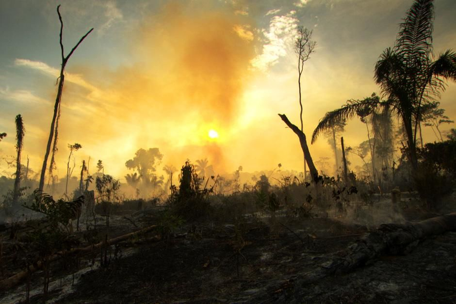 The Amazon Rainforest is suffering rapid deforestation at the hands of people that use logging an... [Foto do dia - Julho 2012]