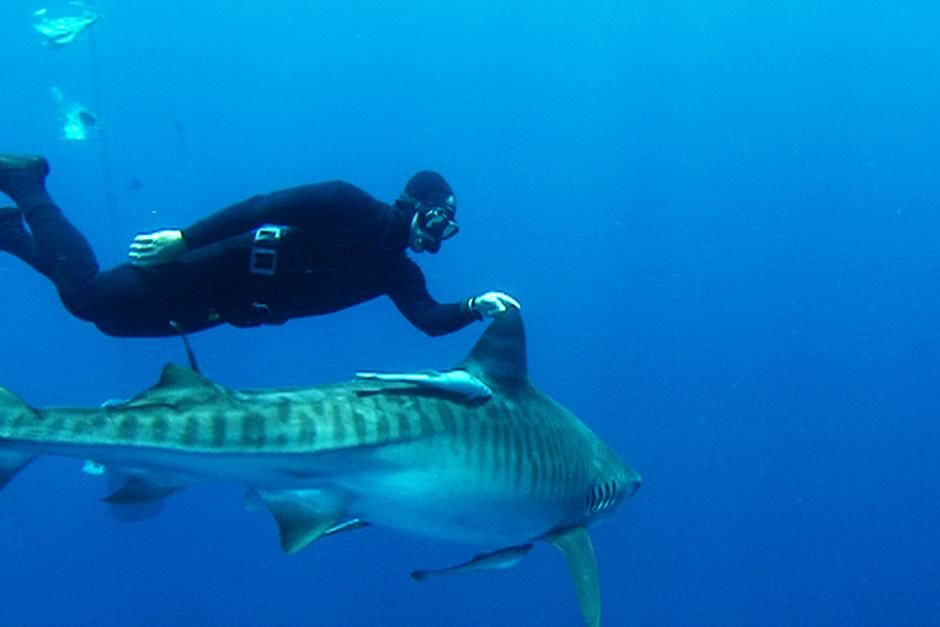 Aliwal Shoal, South Africa: Diver swimming with Tiger Shark.  Riaan Venter filmed Mark Addison in... [Dagens billede - juli 2012]