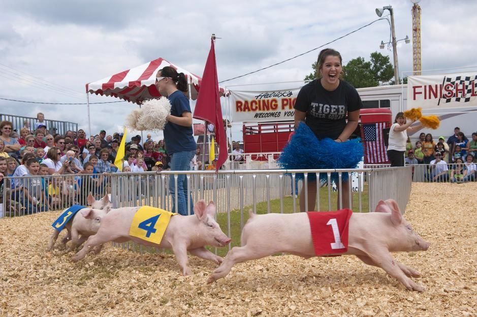 Cheering for a pig race at the Kansas State Fair. USA. [Dagens foto - september 2011]