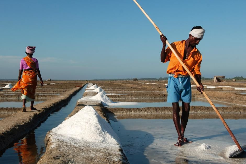 Man collecting salt. Tharangambadi, Tamilnadu, India. This image is from Laya Project. [Dagens foto - oktober 2012]