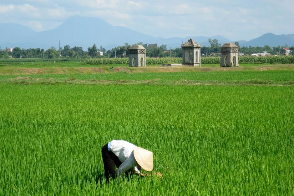 Woman working in an open grass field. This image is from Food Lover's Guide to the Planet. [Photo of the day - 十月 2012]