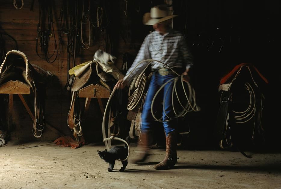 Cowboy Justin Johnson playfully lassoes a kitten, Texas. USA. [Photo of the day - October 2011]