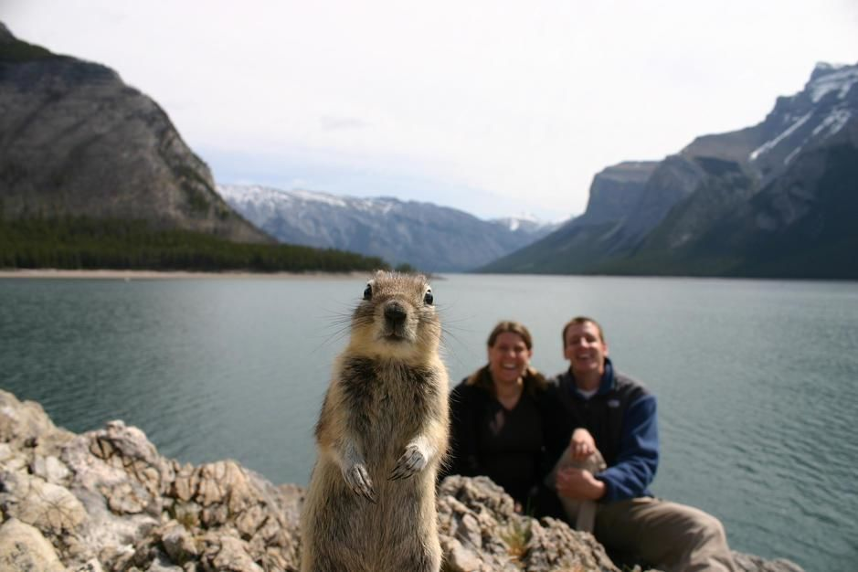 A squirrel steals the shot by tripping the wire to a couple's camera, Alberta. Canada. [Photo of the day - October, 2011]