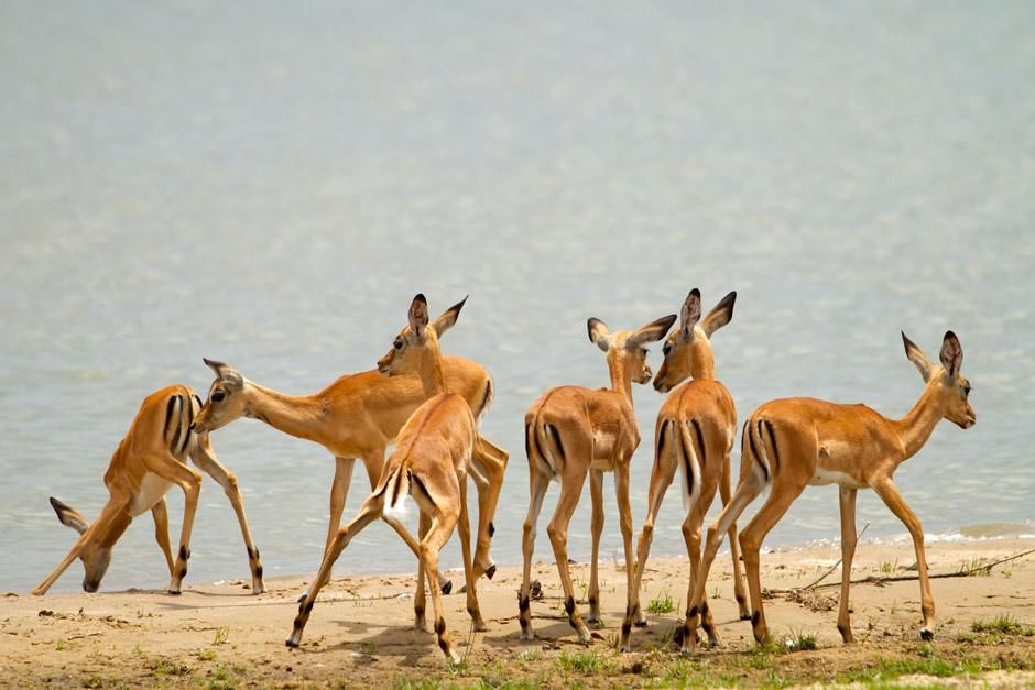 Southern Tanzania: Home to over half a million antelope the Selous Game Reserve has an abundance ... [Photo of the day - دسامبر 2012]