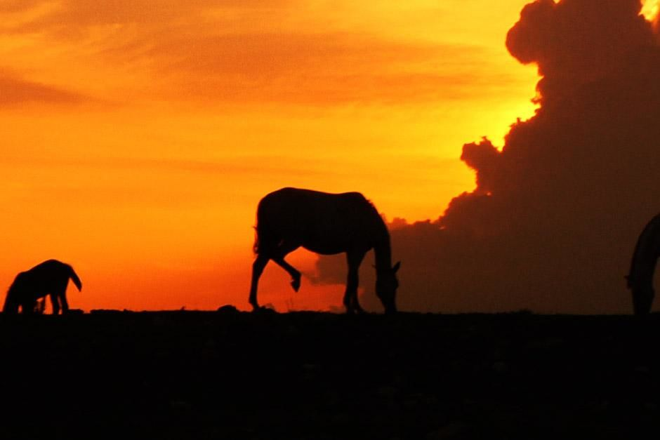 Big Cypress, FL, USA: A silhouette of a horse against the orange Florida sky. This image is from... [Foto del día - diciembre 2012]