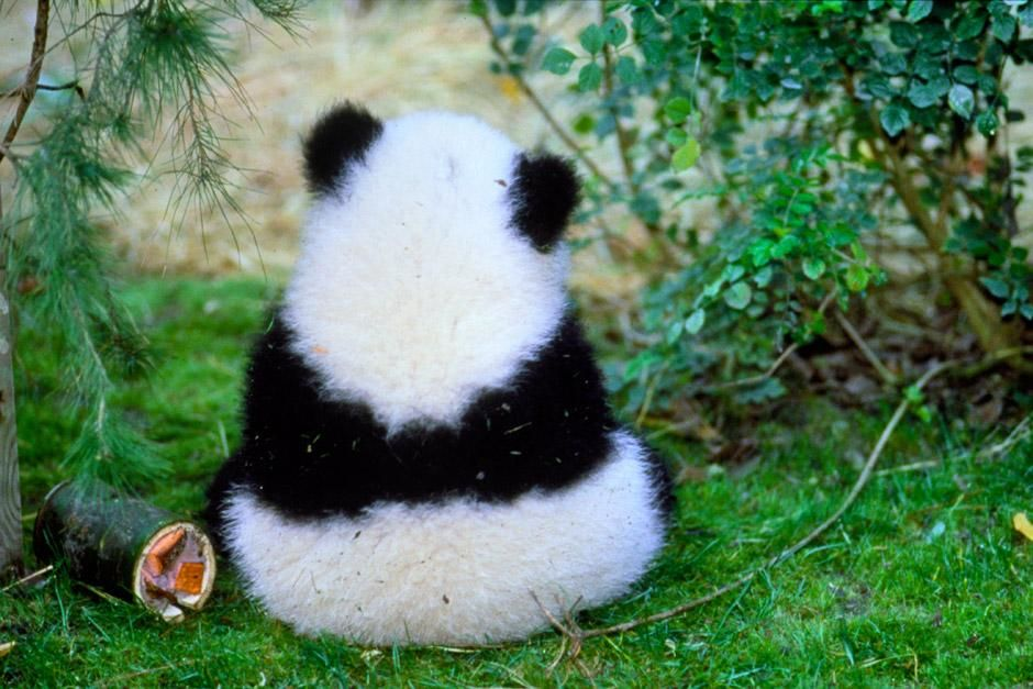 Hua Mei - Giant Panda Cub. This image is from Panda Baby. [Photo of the day - December 2012]