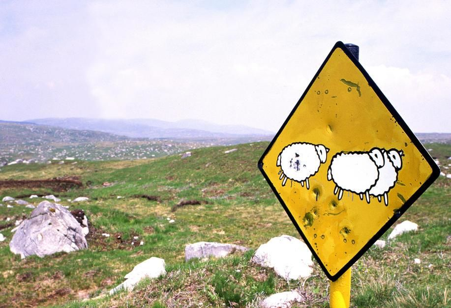 Irish Road Sign depicting sheep crossing the road. Ireland. [Photo of the day - October 2011]