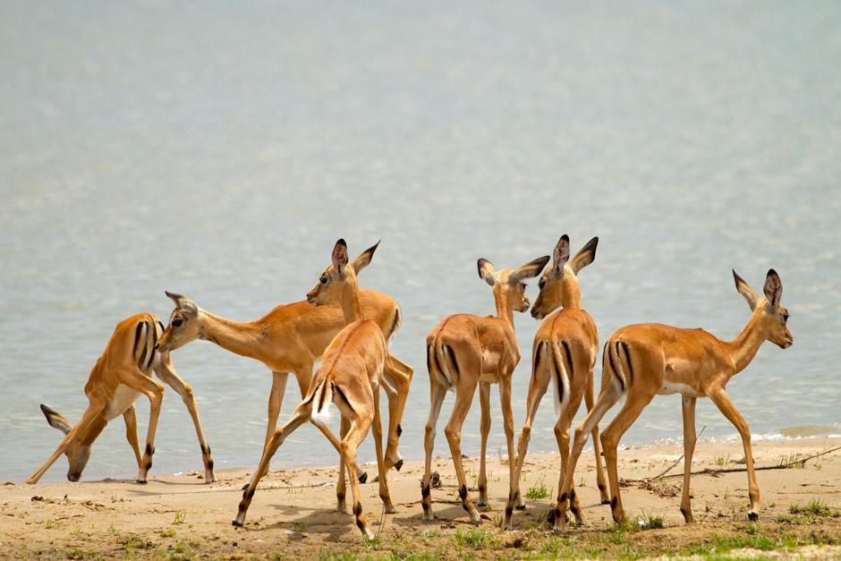 """Impressionen aus Tansania. Das Bild stammt aus """"Die letzten Jäger"""". [Foto des Tages - Dezember 2012]"""