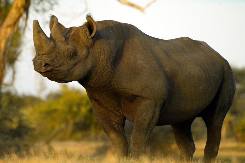 """Impressionen aus Botswana: Das Bild stammt aus """"Die Rückkehr des Nashorns"""". [Foto des Tages - Dezember 2012]"""