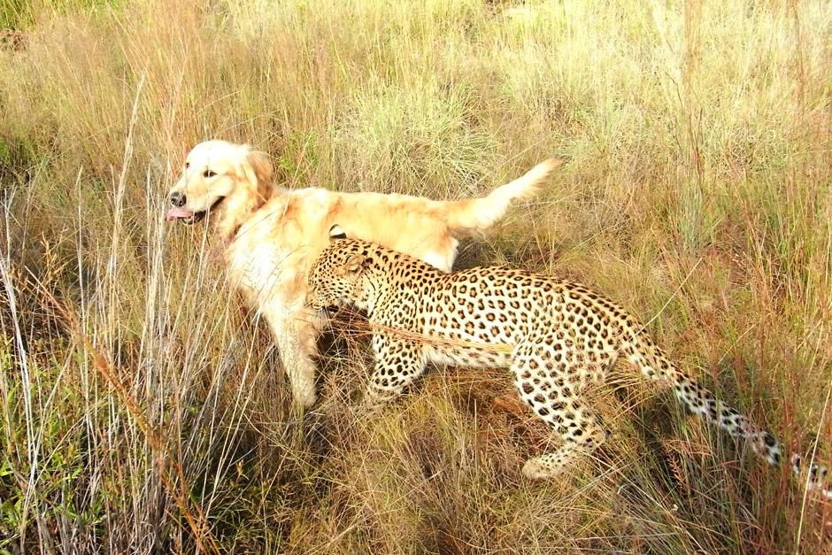 """Salati, ein 14 Monat alter Leopard. Das Bild stammt aus """"Tierische Freundschaften"""". [Foto des Tages - Dezember 2012]"""