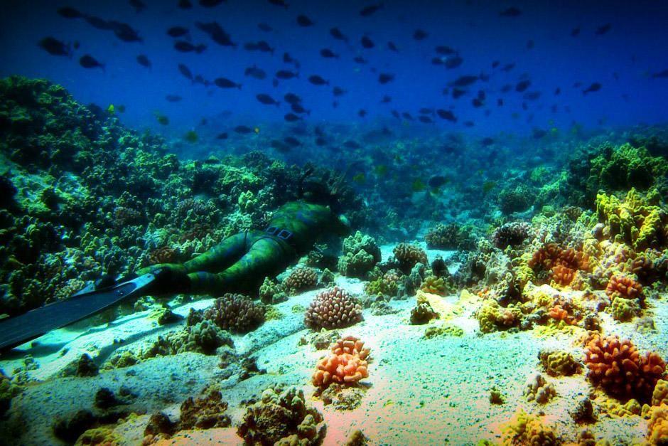 """Paradiesisches Hawaii. Das Bild stammt aus """"Bob Ballards Reich der Tiefsee"""". [Foto des Tages - Dezember 2012]"""