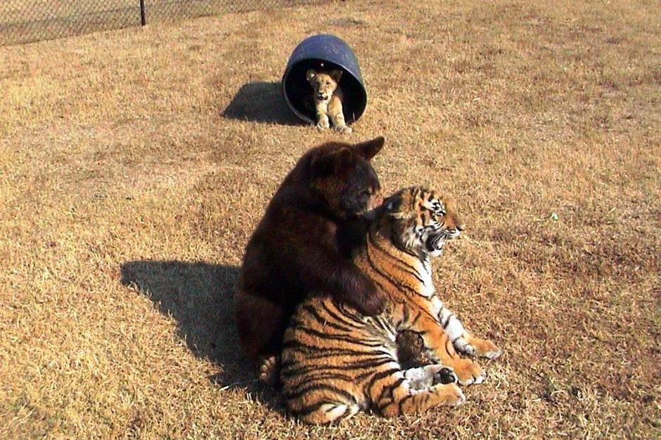 """Eine ungewöhnliche Liebe. Das Bild stammt aus """"Tierische Freundschaften"""". [Foto des Tages - Dezember 2012]"""