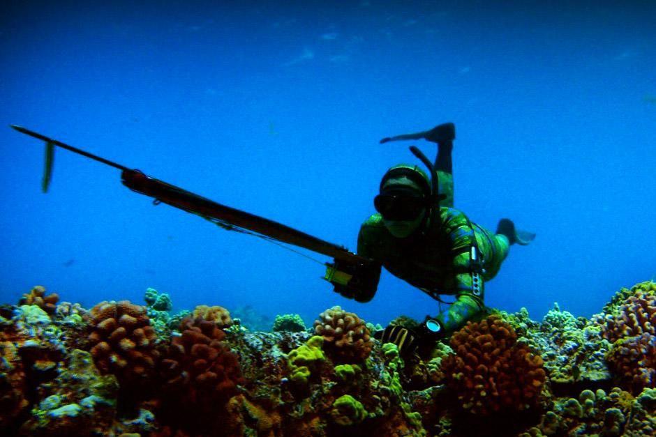 """Faszination Hawaii. Das Bild stammt aus """"Bob Ballards Reich der Tiefsee"""". [Foto des Tages - Dezember 2012]"""