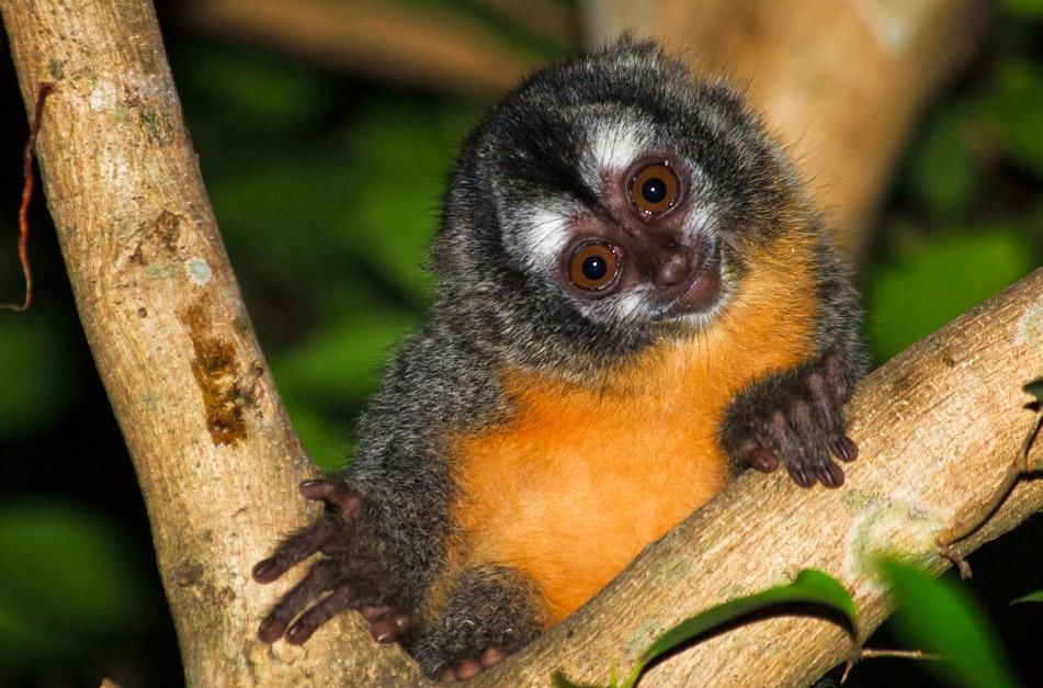 A little monkey in Pantanal. This image is from Secret Brazil. [Photo of the day - January 2013]