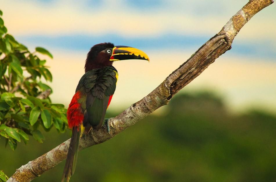 Bird in Pantanal. This image is from Secret Brazil. [Photo of the day - January 2013]
