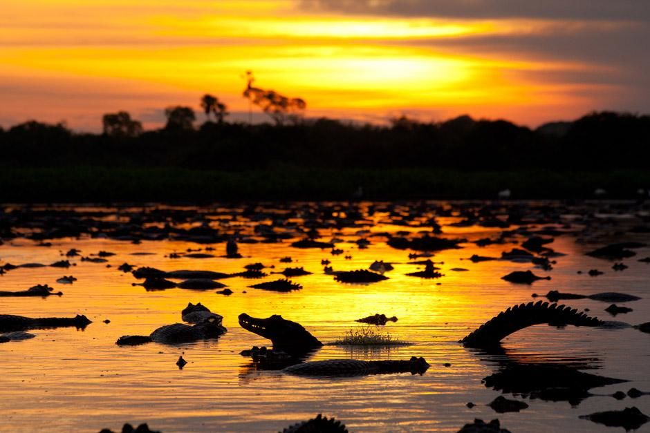 Caimans at sunset. This image is from Secret Brazil. [Photo of the day - ژانویه 2013]