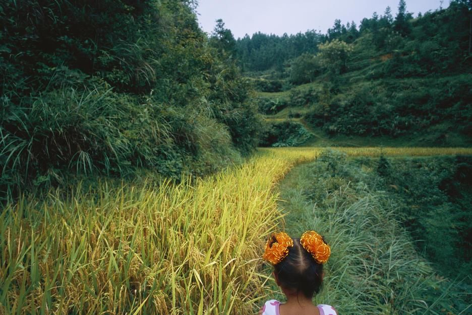 A young girl wanders the rice fields outside a village in the Guizhou Province. People's Republic... [Photo of the day - October 2011]