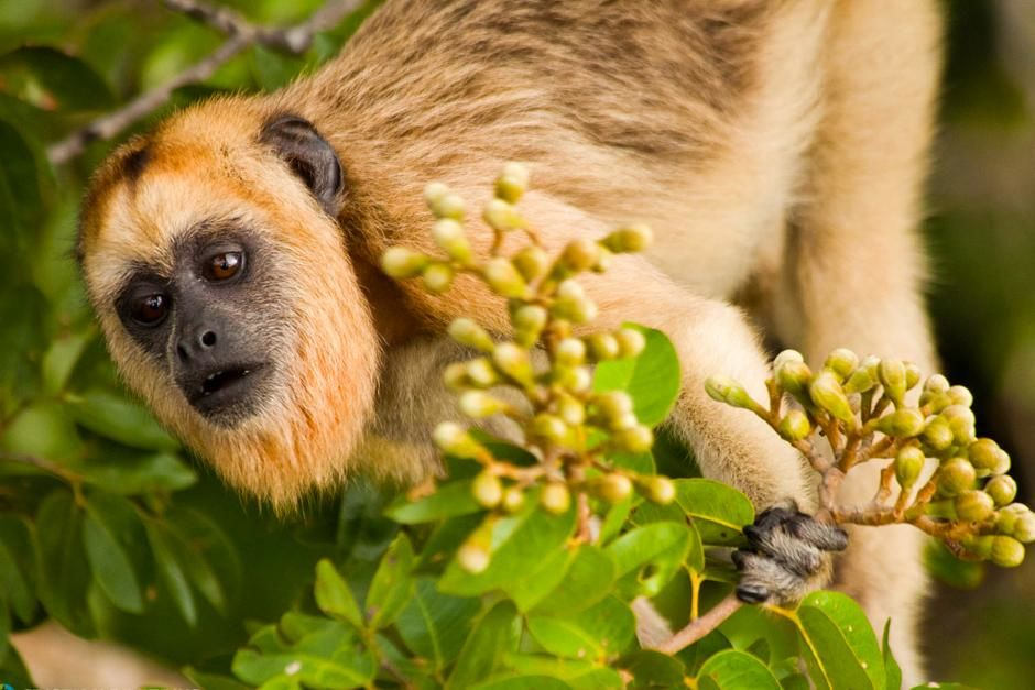 Monkey in Pantanal. This image is from Secret Brazil. [Photo of the day - March 2013]
