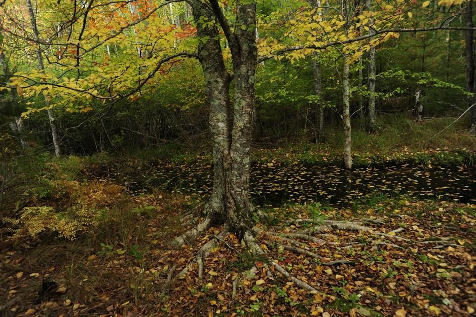 Autumn foliage in Acadia National Park, Maine [Photo of the day - юли 2011]