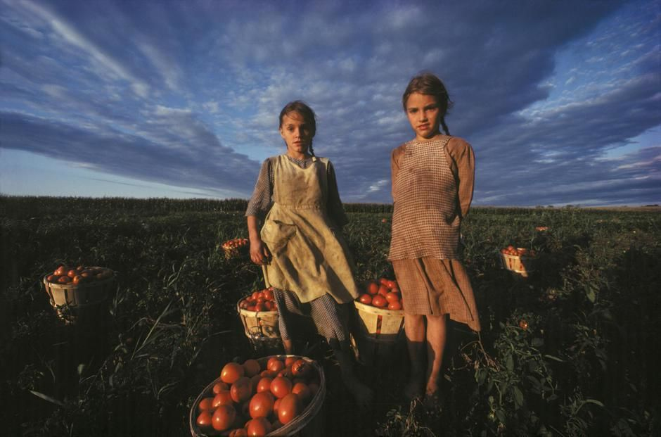 Two Amish girls under a cloud-filled sky with bushels of tomatoes in Lancaster, Pennsylvania. USA. [Fotografija dneva - november 2011]