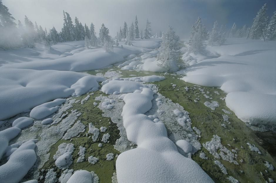 Winterszenerie im Yellowstone-Nationalpark in Wyoming.  [Foto des Tages - November 2011]