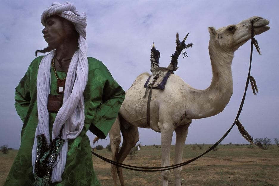 Un homme wodaabe tient les rnes de son chameau mehari. Niger. [La photo du jour - novembre 2011]
