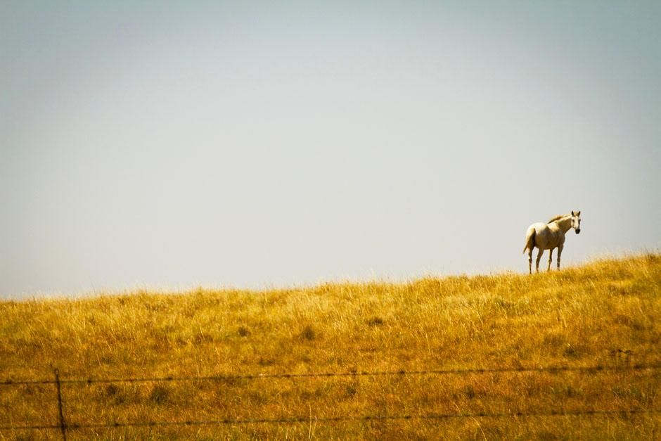 Oklahoma, USA. Ahorse on top of a hill.  This image is from Mudcats. [  -  2013]