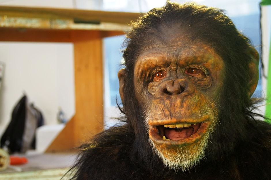 London, United Kingdom: Ape actor, Peter Elliott in an ape suit. This image is from Ape Man. [عکس روز - ژوئن 2013]