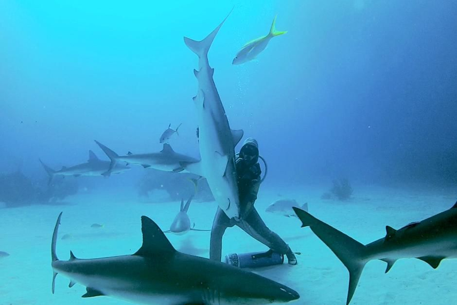 Bahamas: Christina balancing a shark. This image is from Shocking Sharks. [Photo of the day - July 2013]