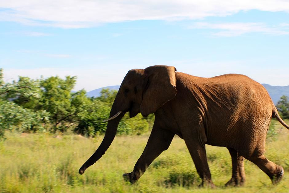 Africa: REENACTMENT: An elephant runs across the game reserve. This image is from Dead or Alive. [Photo of the day - اگوست 2013]