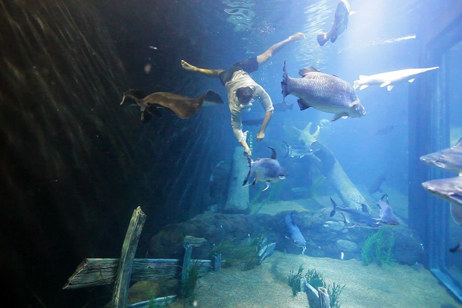 Tennessee, USA: Zeb swimming with the fishes in the Tennessee Aquarium. This image is from Monste... [Photo of the day - November 2013]