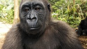 Bwindi Impenetrable National Park, Ug... [عکس روز -  3 دسامبر 2013]