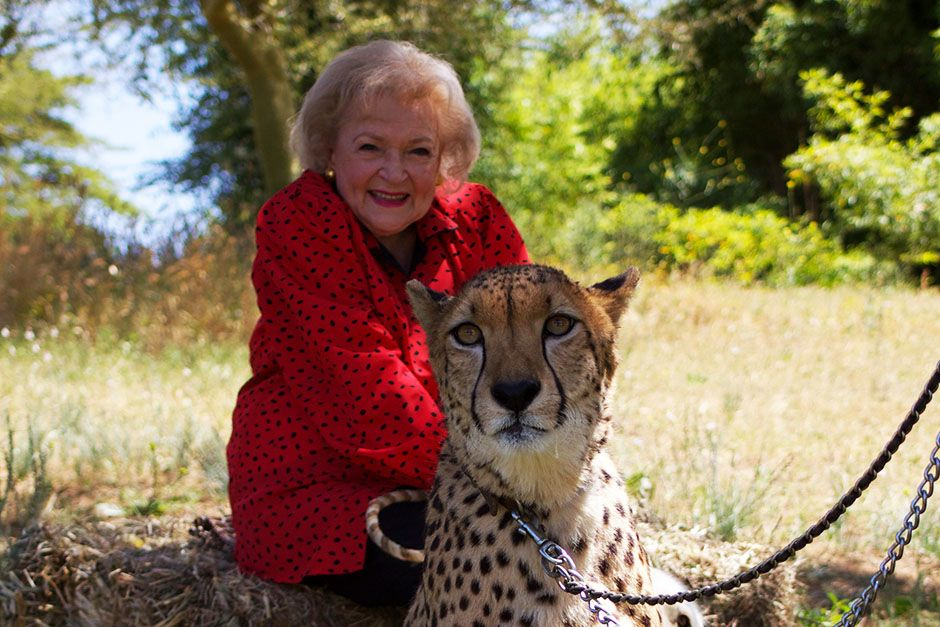 San Diego, California, USA: Betty White sitting with a big cat. This image is from Betty White... [Photo of the day - 一月 2014]