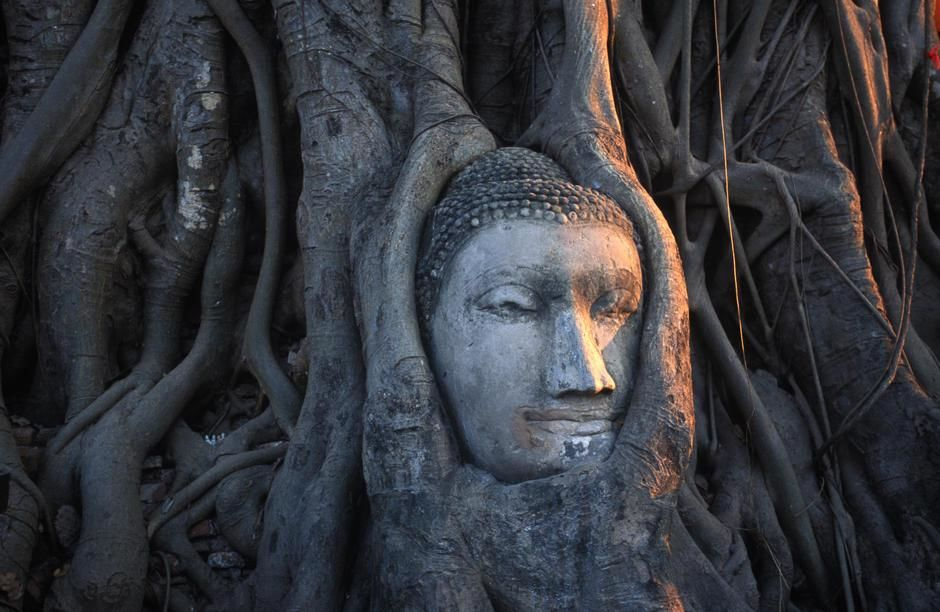 Sunlight falls on a tree root emtwined head of a Buddha statue in Wat Phra Maharthat, Ayuthaya. [Dagens billede - januar 2012]