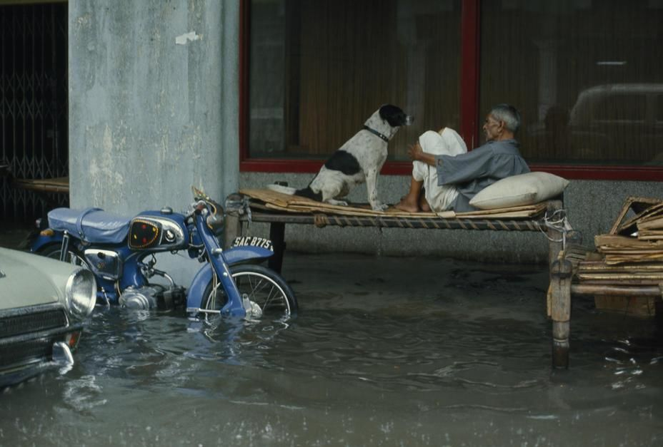 A night watchman and dog sit on a make-shift bed on a flooded street. [Photo of the day - פברואר 2011]