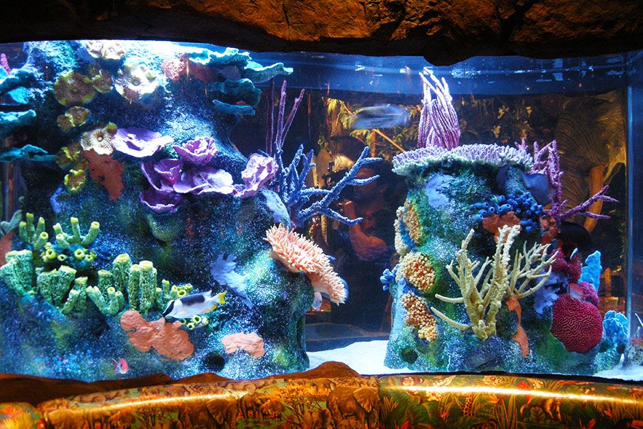Orlando, Florida, USA:  The Rainforest Cafe's renovated reef structure is on display.  This... [Photo of the day - February 2014]