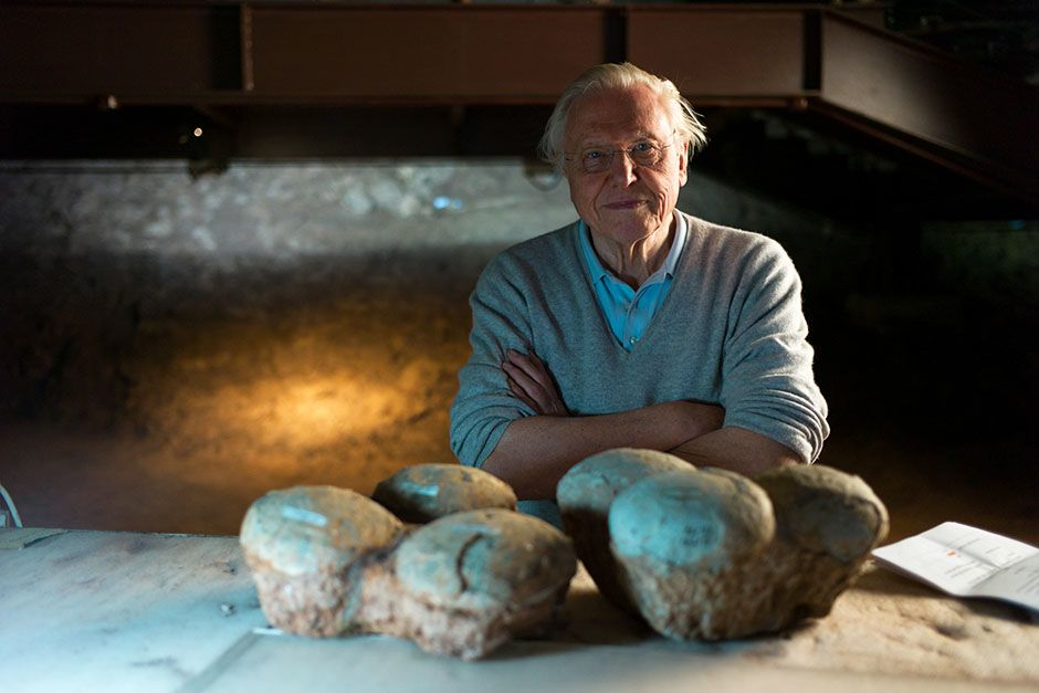 Lufeng Dinosaur National Geopark, China: Portrait of David Attenborough with Dinosaur eggs in... [Photo of the day - February 2014]