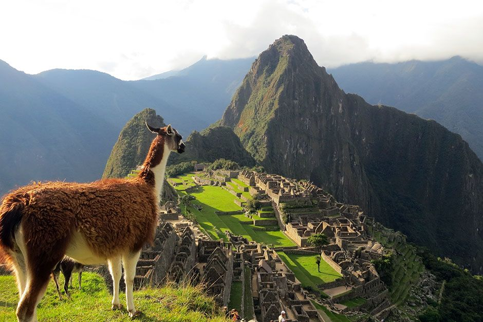 Machu Picchu, Cusco, Peru: A scenic shot of a llama looking towards Machu Picchu in Cusco, Peru.... [Photo of the day - February 2014]