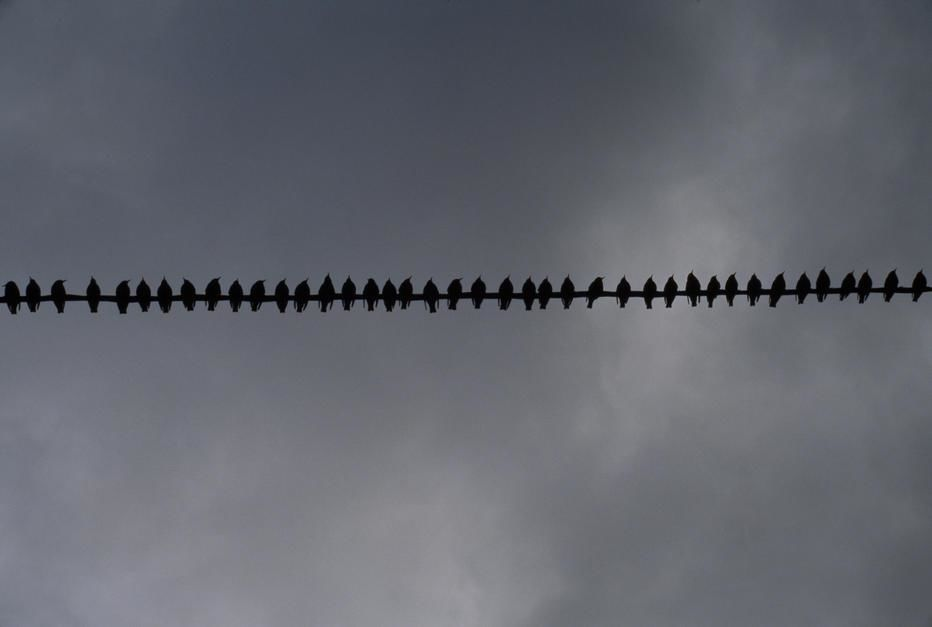 Birds on a telephone wire. [Foto do dia - Maro 2011]