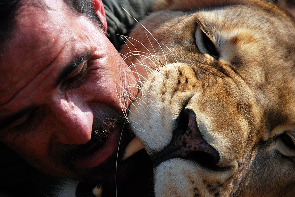 Kevin Richardson and a Lion getting up close with each other. This image is from The Lion Whisperer. [Foto del día - marzo 2014]
