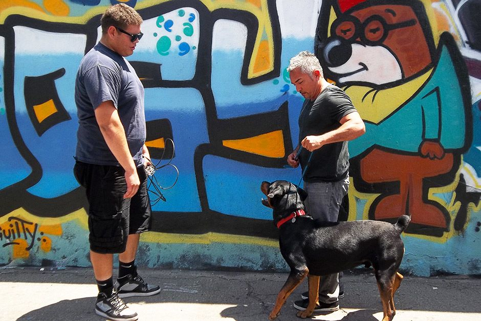 Los Angeles, CA: Steve looking at Cesar holding Shadow. This image is from Cesar To The Rescue. [Photo of the day - אפריל 2014]