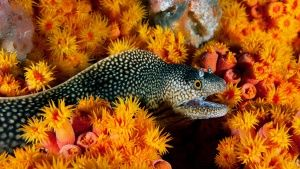 An eel slithers through a patchwork of coral covering the seafloor of Gabon, Africa. This image i... Photo of the day - 25 April 2014