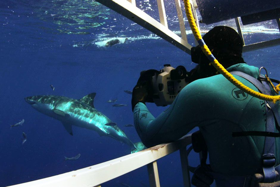 A man in a cage underwater with a shark swimming next to him. This image is from Do or Die. [Photo of the day - May 2014]