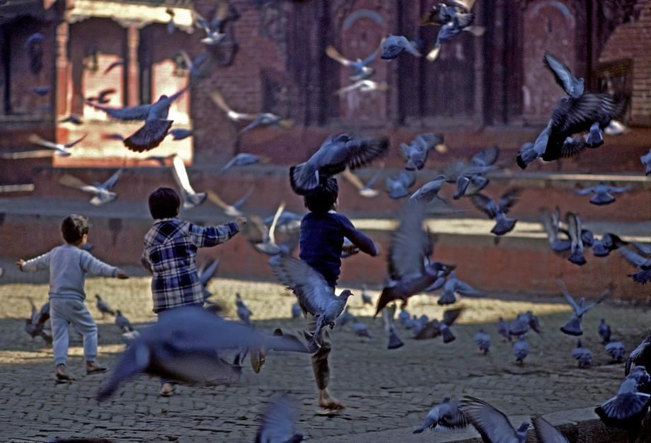 Children chase pigeons in Durbar Square, Kathmandu. [Photo of the day - مارس 2011]