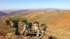 View from Mount Arden, Southern Flinders Ranges / South Australia direction Wilpena Pound. Some r... Photo of the day - 25 ژولیه 2014